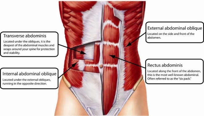 human core muscles